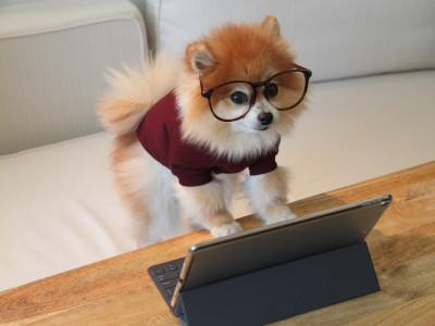 chien à l'aide d'une tablette